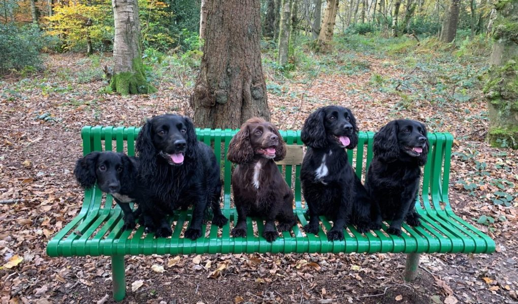 what commands to use when training spaniels