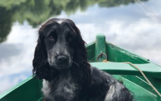 best essential oils for working dogs