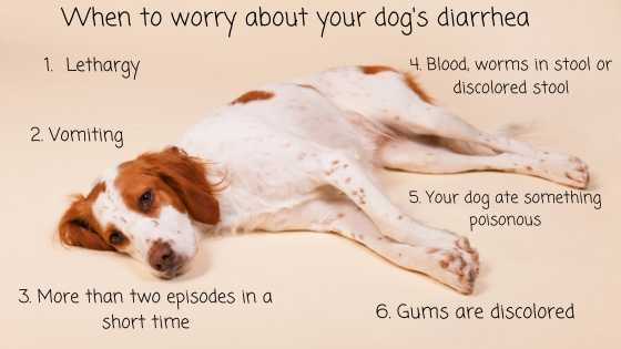 When to worry about your dogs diarrhea (2)