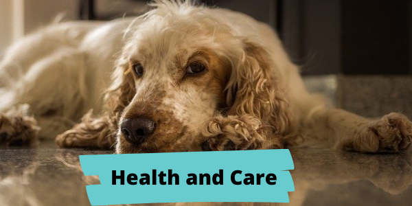 easy spaniel training health and care