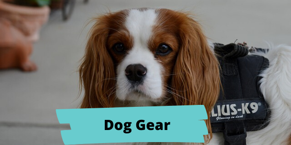 easy spaniel training dog gear