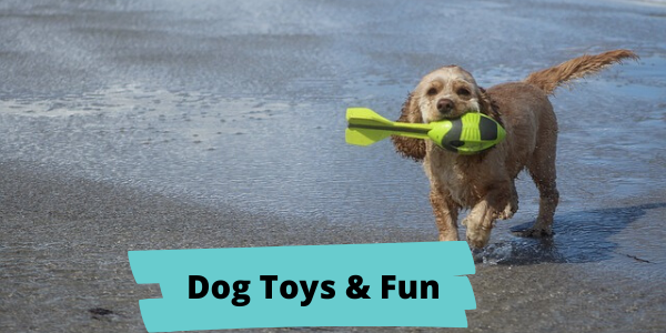 easy spaniel training dog toys and fun