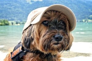 where to leave your dog while on vacation