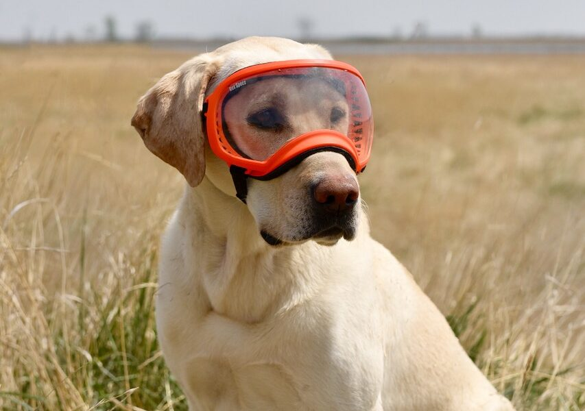 dog goggles for hunting