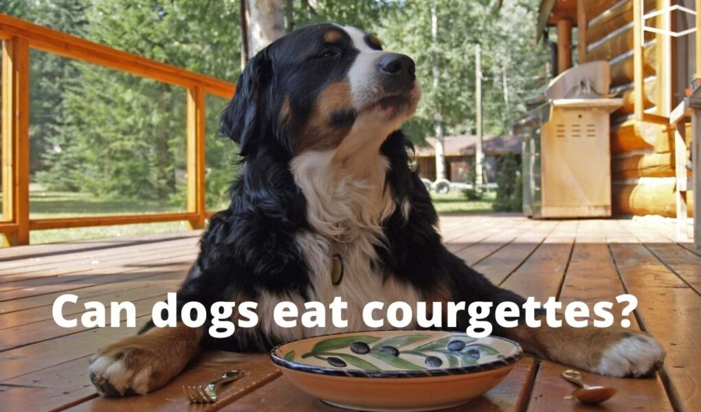Can dogs eat raw courgettes