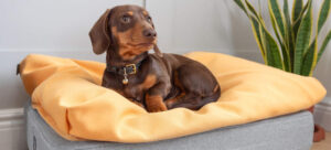 best customizable dog bed