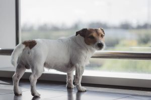 how to help your dog with separation anxiety