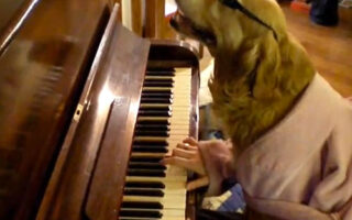 do dogs like singing