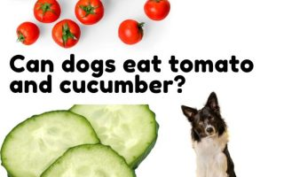 Can-dogs-eat-tomato-and-cucumber