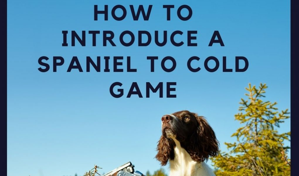 how to introduce a spaniel to cold game (1)