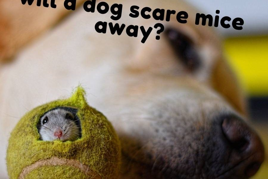 will a dog scare mice away