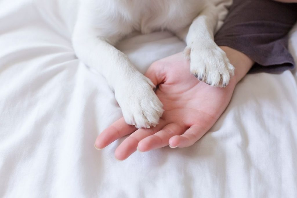 what does it mean when a dog puts his paw on you