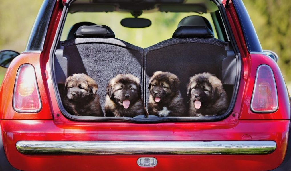 what is the safest way to transport a dog in a car