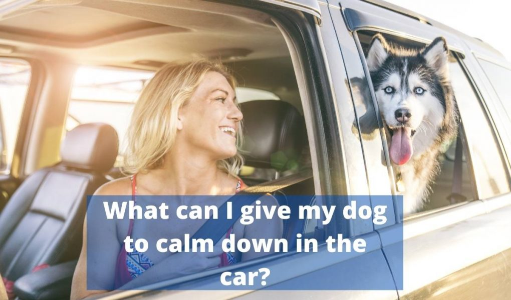 what can I give my dog to calm down in t