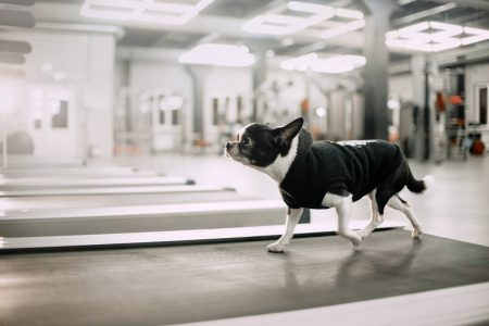 5 best treadmills for dogs