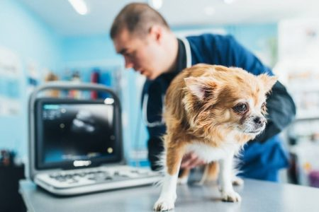 What are the best portable ultrasound scanners for dog breeders