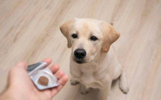 8 ways to get a dog to take a pill