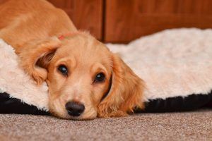 what is the best dog bed for a dog with arthritis
