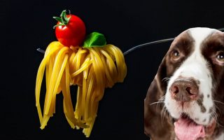 can dogs eat spaghetti