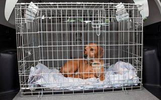 dog in car cage