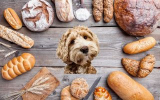 Can-dogs-eat-white-bread_-2