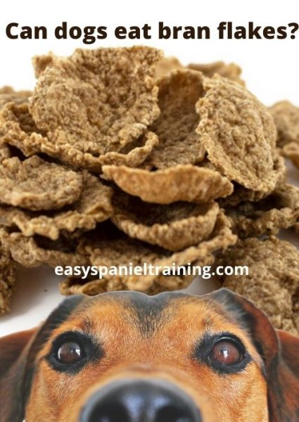 Can dogs eat bran flakes_