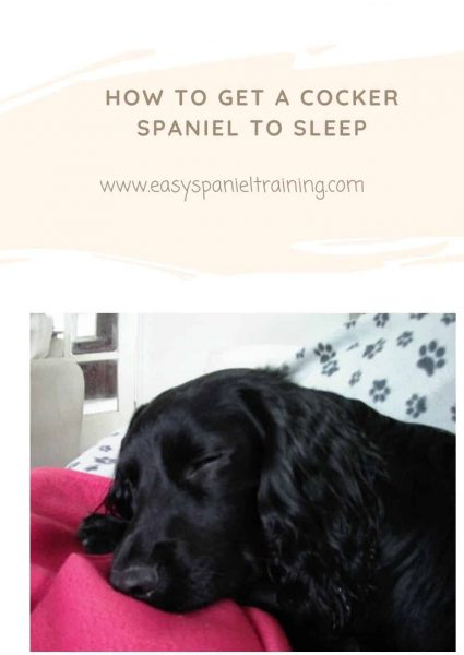 how to get a cocker spaniel to sleep