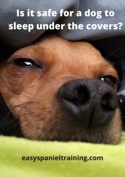 Is it safe for a dog to sleep under the covers_