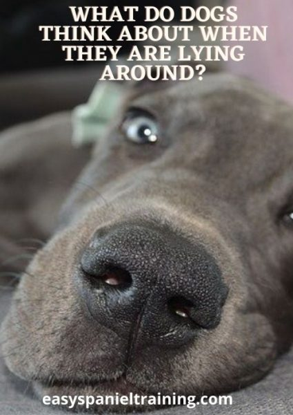 What do dogs think about when they are lying around