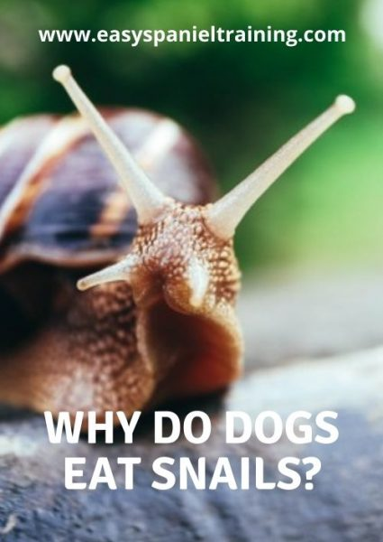 why do dogs eat snails
