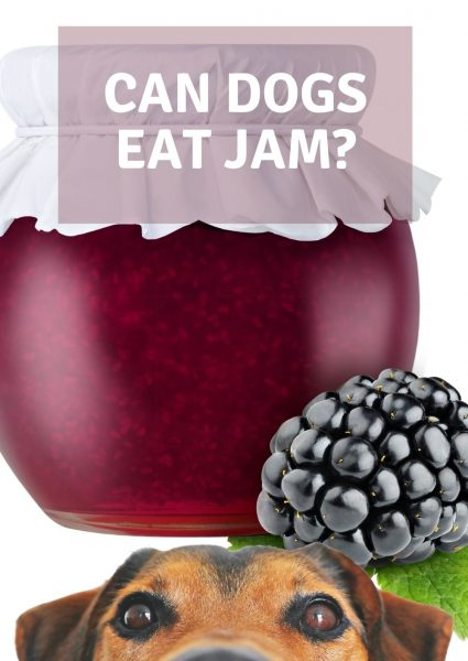 can dogs eat Jam