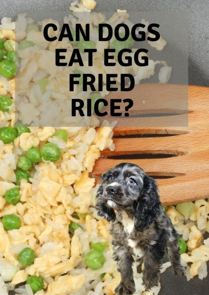 can dogs eat egg fried rice_
