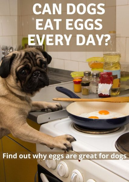 can dogs eat eggs every day