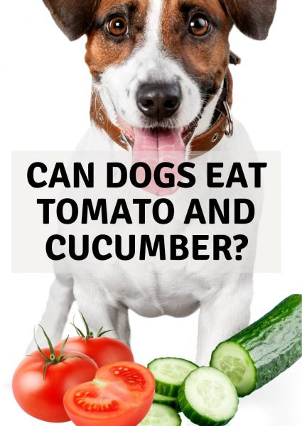 can dogs eat tomato and cucumber