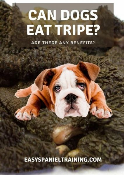 can dogs eat tripe