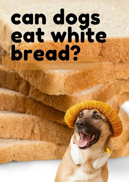 can dogs eat white bread