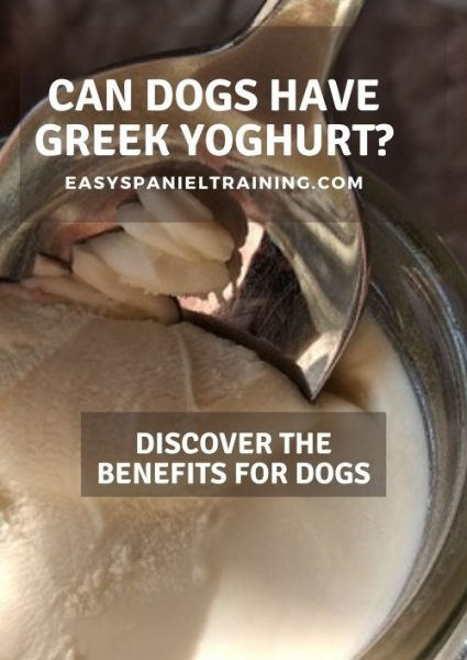 can dogs have greek yoghurt