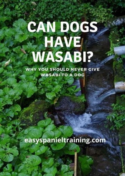 can dogs have wasabi