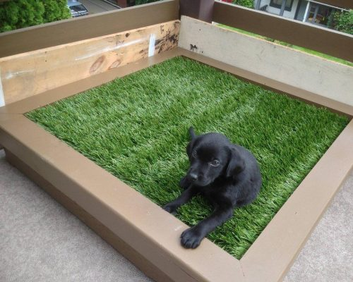 how to make a patio dog friendly