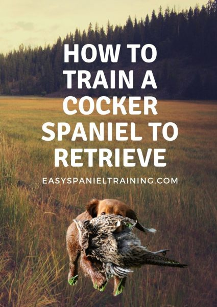 how to train a cocker spaniel to retrieve