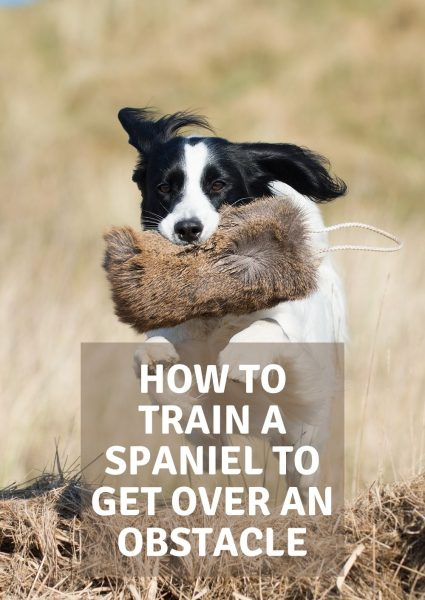 how to train a spaniel to get over an obstacle