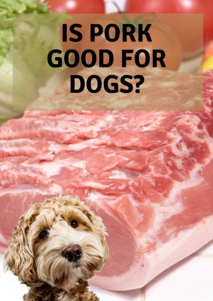 is pork good for dogs