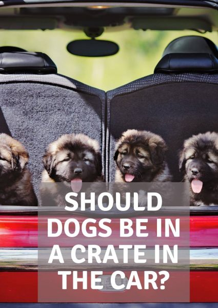 should dogs be in a crate in the car