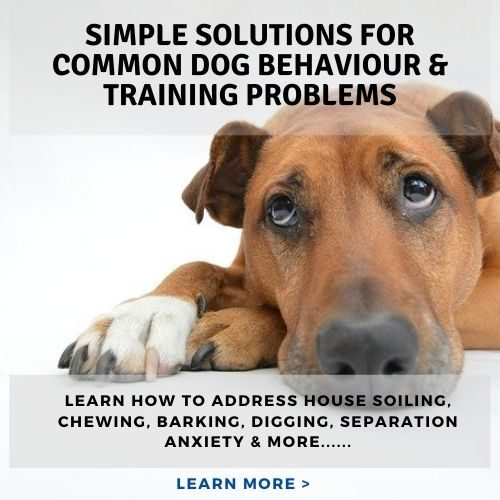 simple solutions for common dog behaviour & training problems (1)