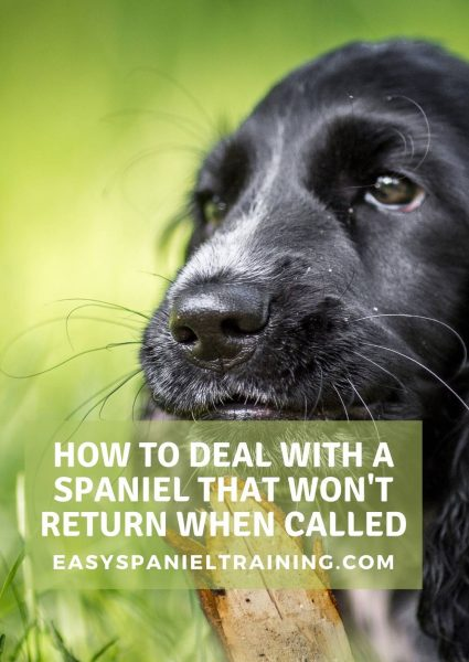 how to deal with a spaniel that won't return when called