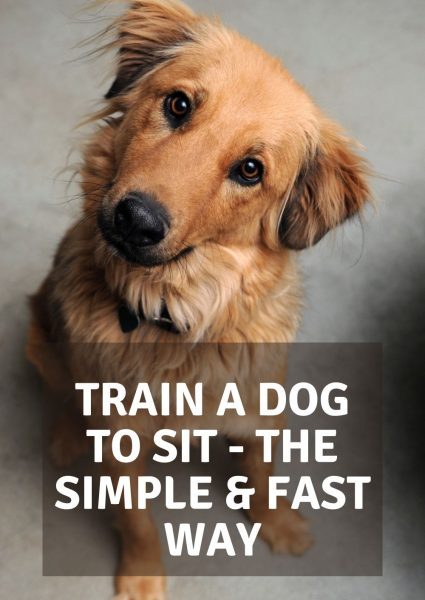 train a dog to sit - the simple & fast way