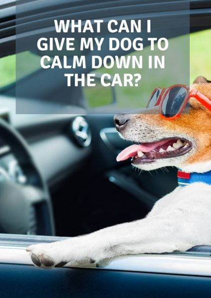 what can i give my dog to calm down in the car