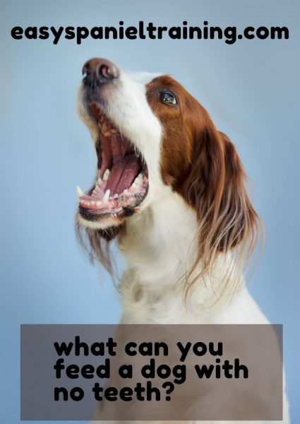 what can you feed a dog with no teeth