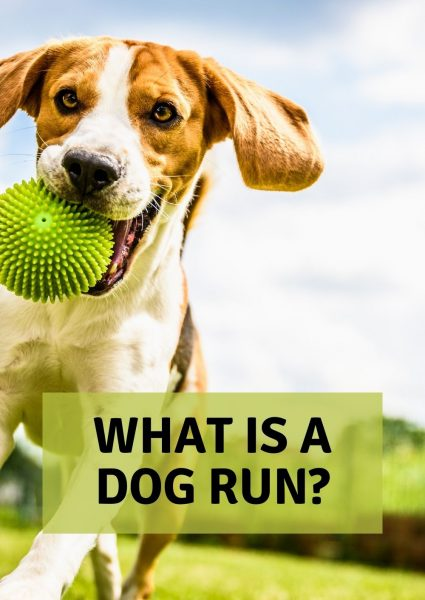 what is a dog run