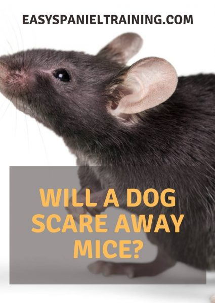 will a dog scare away mice